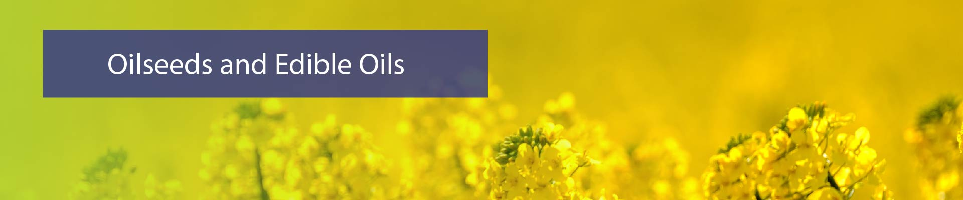 Oilseed quick-01