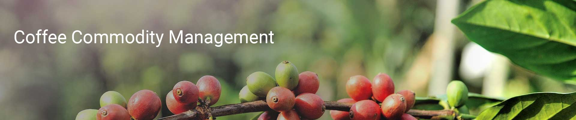 coffee commodity management-01