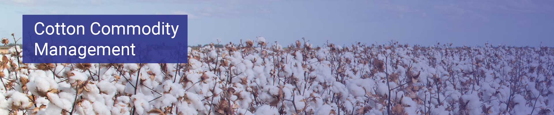 cotton ctrm banner-01